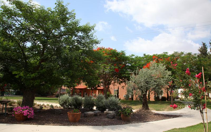 עצים, פרחים ומבנים במתחם האירוח