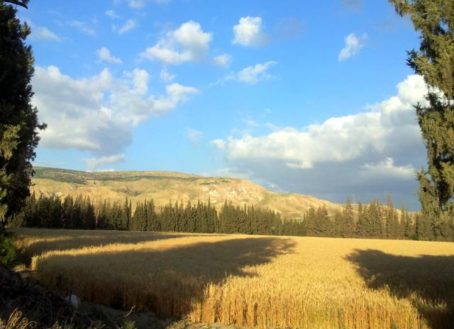 שדות הקיבוץ בעמק הירדן