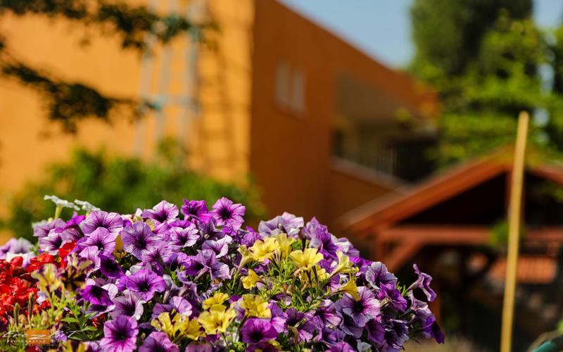 פרחים בגן הנוי