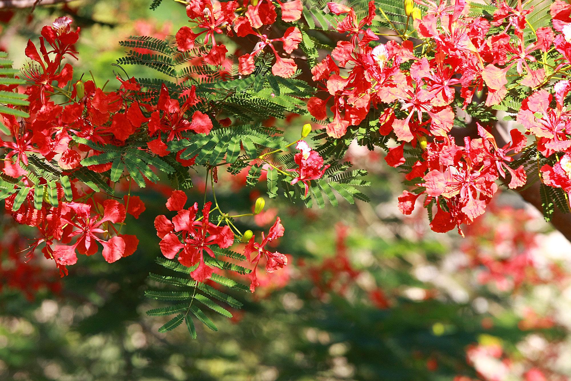 עצים בפריחה
