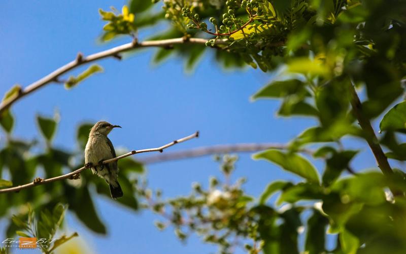 ציפורים בגן הנוי