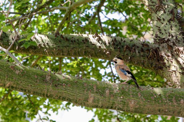 עצים וציפור בגן הנוי