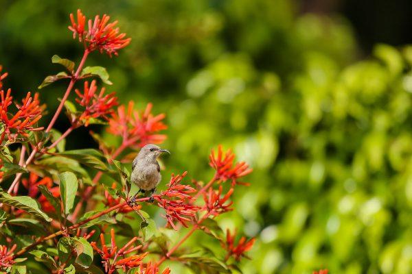 ציפור על פרחים