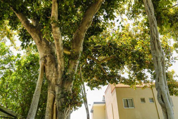 עצים ומבנים במתחם האירוח