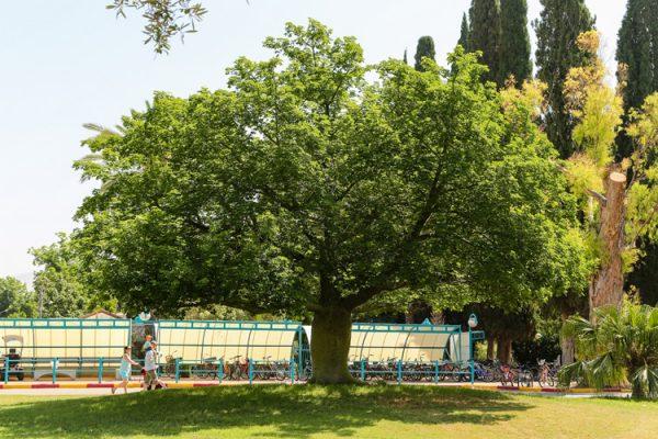 עץ בקיבוץ