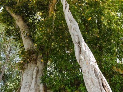 עצים בקיבוץ